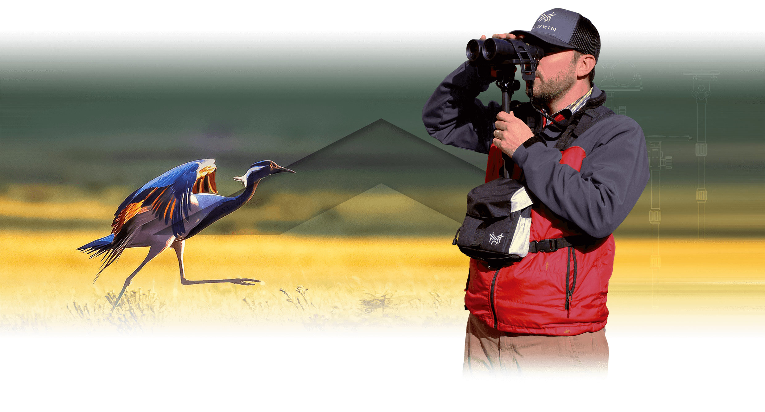 Homepage slide for Hawkin Birding - Billings, Montana